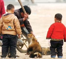 河北肃宁裘皮市场调查:动物被残忍活剥毛皮(图)