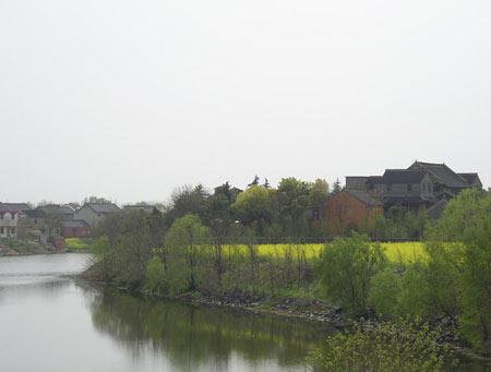 组图:烟花三月江南水乡河畔油菜花盛开