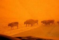 沙尘暴,沙尘,沙尘天气
