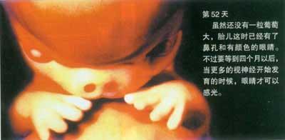 当精子遇到卵子(组图)