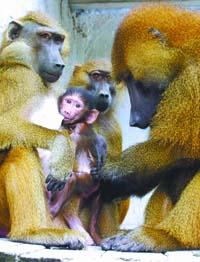 会利益交换懂分工合作:动物也守经济法则(图)
