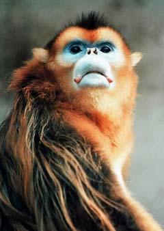 为赠台金丝猴征名,起名,赠送金丝猴,金丝猴,台湾,台胞,宋楚瑜,访问,大陆