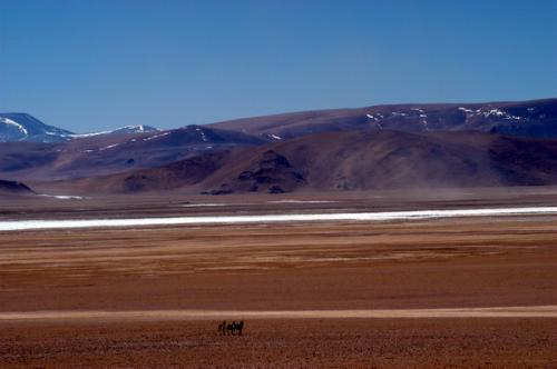 组图:珠峰复测风情篇――野驴飞奔