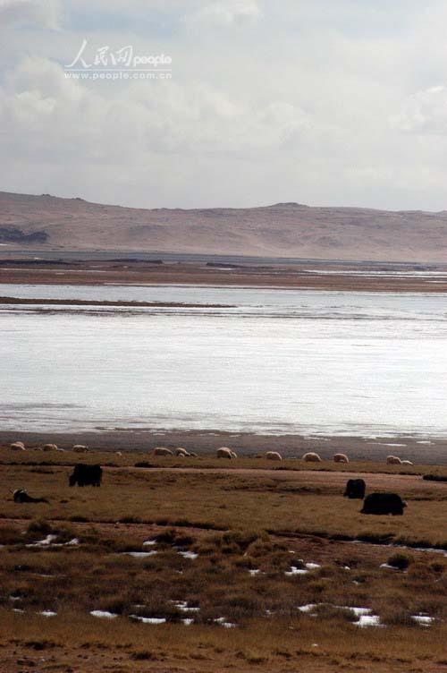 组图:珠峰复测风情篇 风吹草低现牛羊
