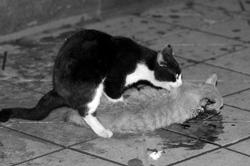 真情时刻:同伴被撞死 花猫雨夜苦守伴侣(组图)