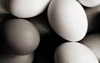 鸡蛋购买和存放(图)