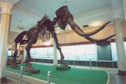 俄罗斯秘密打造史前公园 计划复活猛犸象