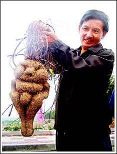 灞河边出现人形植物 专家难解其身世之谜(图)