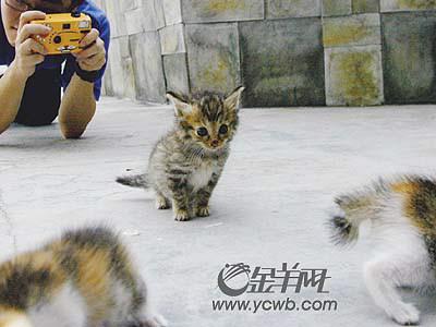 可爱老虎带相机简笔画