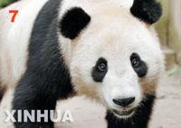 赠台熊猫开征大名 将以电话问卷和网络调查征名