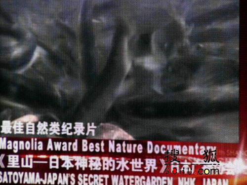 图:第11届上海电视节-最佳自然类纪录片