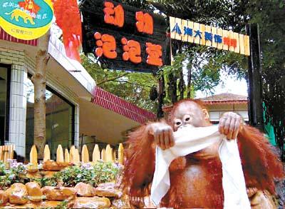 """深圳动物园为动物设""""泡泡堂""""冲开心凉(图)-搜狐广东"""