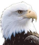 为什么鹰是美国的象征?