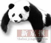 赠台大熊猫要漂亮不孤僻(图)