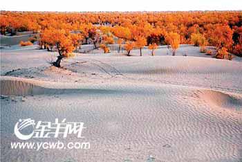 """广东""""驴友"""" 牵毛驴穿越塔克拉玛干沙漠(图)"""