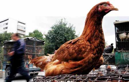 面对禽流感我们能做点什么?