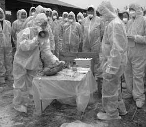 禽流感防控演习