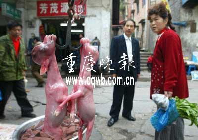 重庆一家汤锅店杀羊取崽当街叫卖 场面血腥(图)