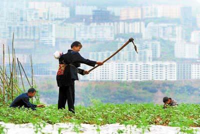 五中全会解读:为何要建设社会主义新农村(组图)