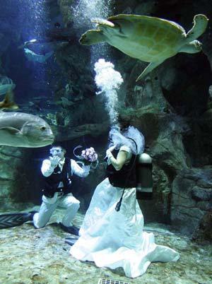 海豚当见证人 海洋公园创意婚礼挑战迪士尼