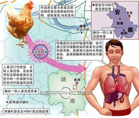 人感染禽流感途径