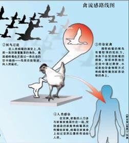 预防禽流感你该怎么做