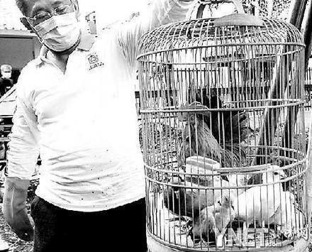 印尼扑杀禽类(图)