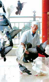 南宁4000多信鸽已基本完成禽流感疫苗注射(图)