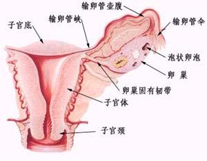 专家谈卵巢肿瘤