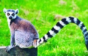 猜图几种动物_全球近800种动物将绝种:多少生命可以重来(图)-搜狐新闻