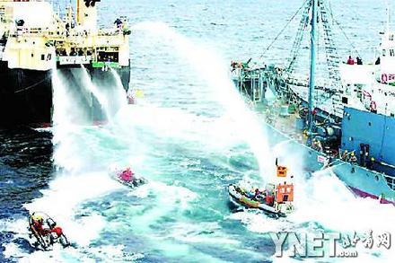 环保组织大战日本捕鲸船澳政府指责双方过激行为(图)