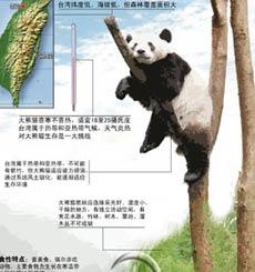 大熊猫移居台湾后过得惯么'