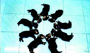 人模狗样:幸福2006(组图)