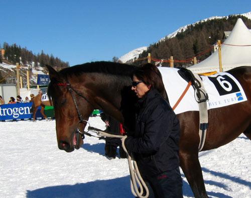冰上马球赛:选手与马各领风骚