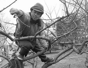 北京园林局与林业局合并 改变绿化城乡分治局面