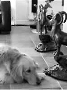 李亚鹏给宠物狗征媳妇 宋祖德劝王菲离婚(图)