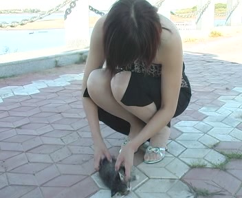 网站出现女子用高跟鞋踩碎小猫脑袋图片(组图)