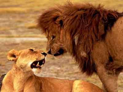 人与动物做爱1715ia{0_趣闻:奇异动物性爱面面观-搜狐女人