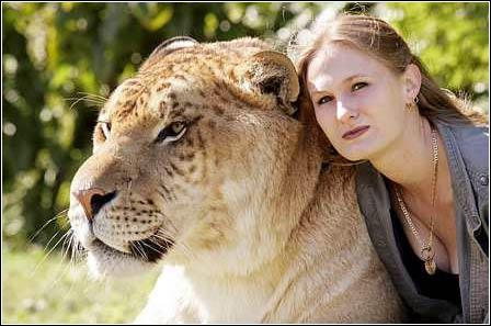 罕见巨型狮虎兽与金发美女