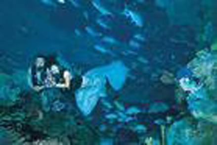 香港新一代游玩天地指南:香港海洋公园