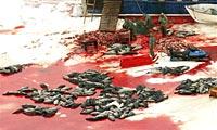 加拿大海豹遭屠杀血染冰海