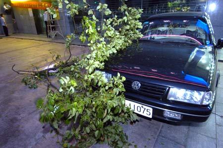 长沙遭遇11级狂风袭击 百年老树被拦腰折断(图)