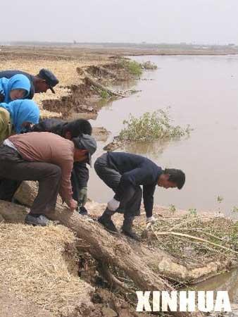 银川黄河塌岸毁坏农田 无助灾民拜祭河神(组图)