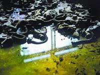 切尔诺贝利核事故20周年