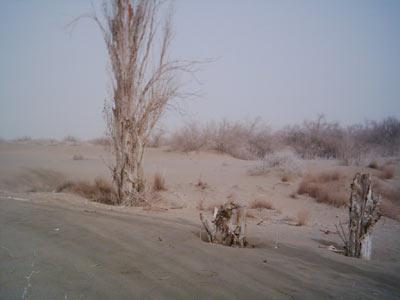 敦煌制定保护生态计划 总理批示治沙必须加快