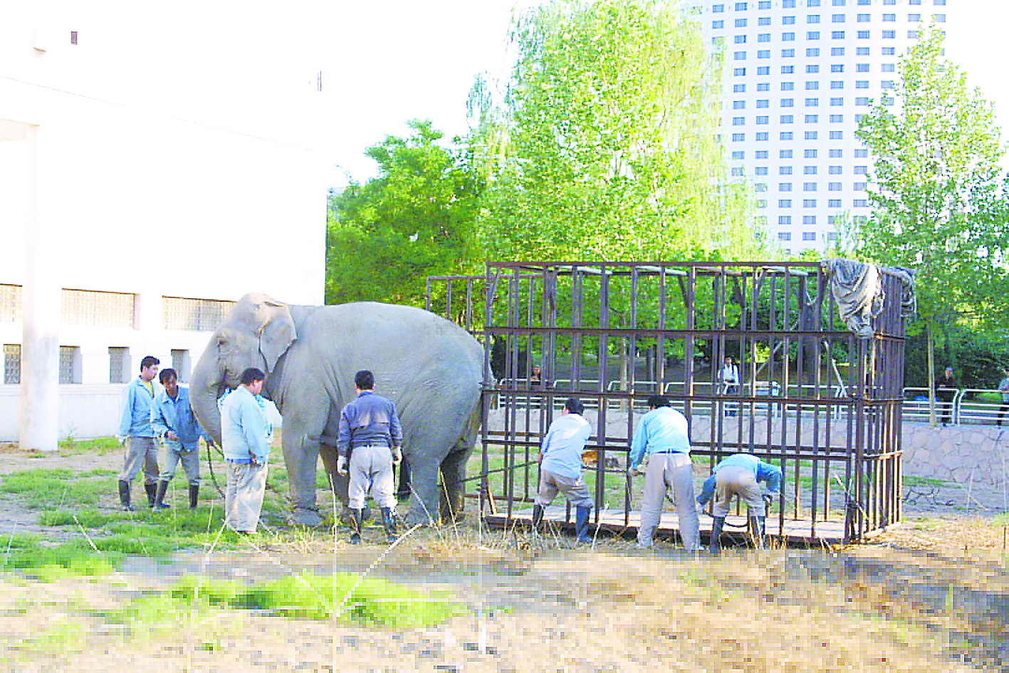 """动物园亚洲象""""远嫁""""山东(图)"""