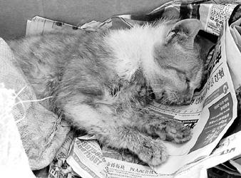 小猫被困大楼烟道获救 一周后被从8楼扔下(图)