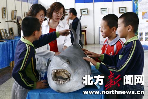 21日,几个小朋友在内蒙古科技馆参观海洋生物标本.据了解,...