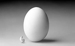 英国基因学家证实先有鸡蛋后有鸡