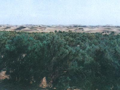 巴丹吉林沙漠的气候、动植物:梭梭